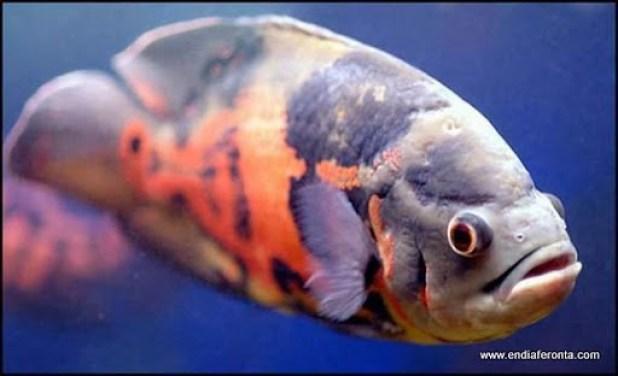 fish-faces16.jpg