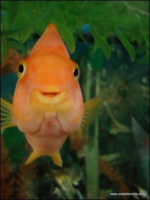 fish-faces19.jpg