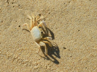 Crab at Sono beach