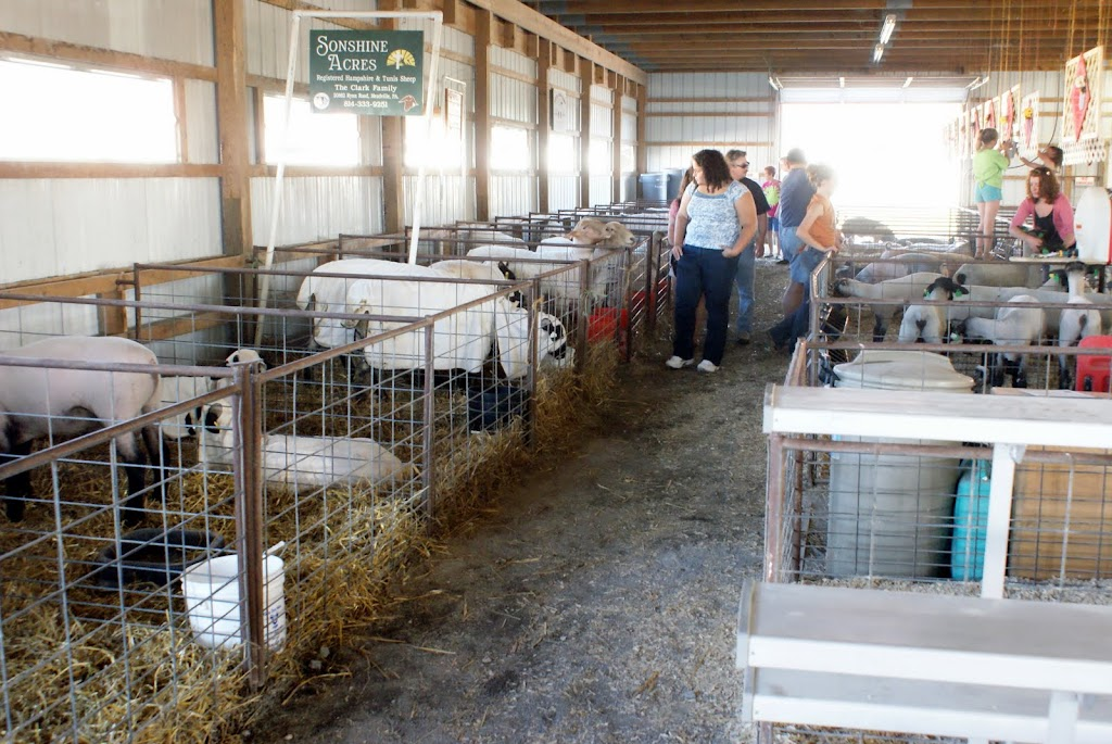 The poor sheep were many and they were hot. I think Seretha petted every one that let her.