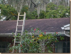 Tampa Roof Cleaning 008