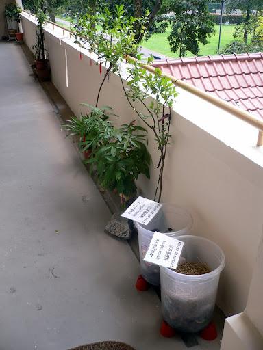 Compost Bins Update – Week 4, Week 6 | Composting In Singapore