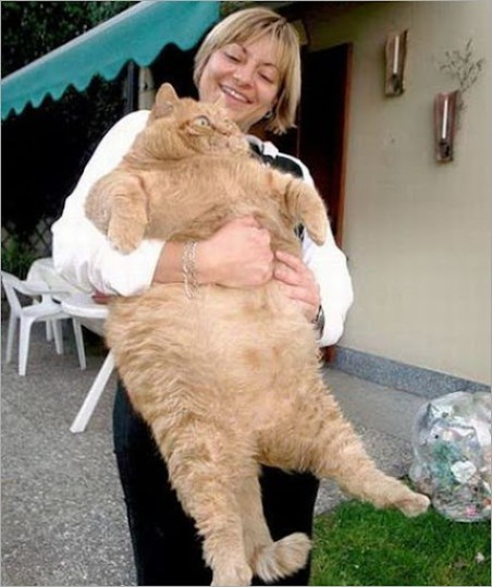 Fat_animals01