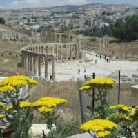 Thistle-stop Tour of Jerash