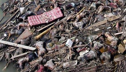 tsunami dead bodies