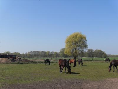 Schöne Grüße von meinem Lieblings-Pferdehof! Eindrücke aus dem Monat Mai