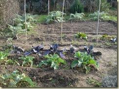 new year garden_1_1_1