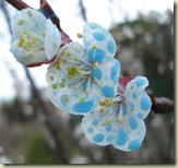 polka dot blossom 3_1_1