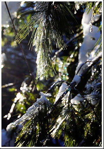 pine and ice bokeh