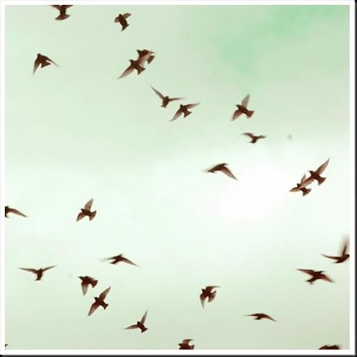 THE BIRDS - Elle Moss