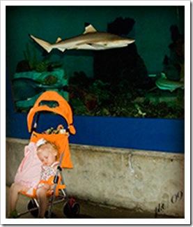 DSC_0050-Kaylin-and-shark