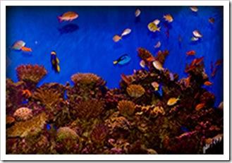 DSC_0132-aquarium
