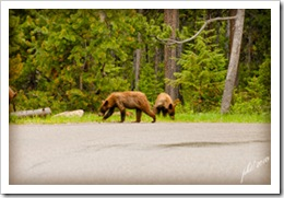 DSC_00902-cubs-mom's-tail