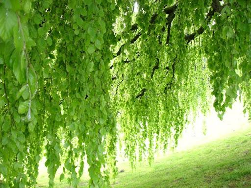 Veel groen in Brugge