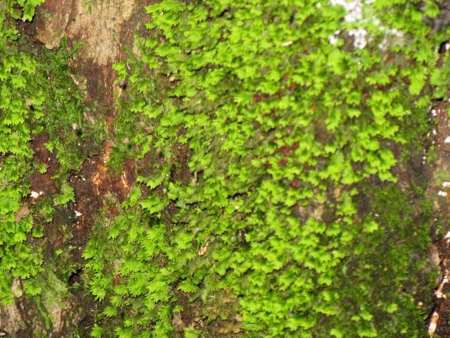 observation moss,lichen