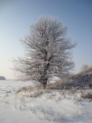 Отличная зимняя погода