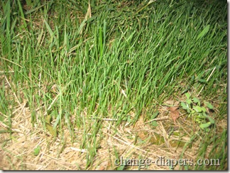 grass close up sept 8