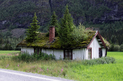 green-roof-norway (1)