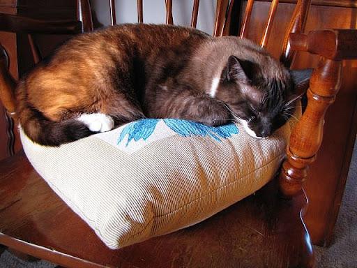 Ming Cat Nap