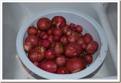 potatoes from garden