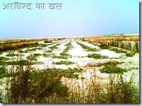 Arvind Farm width