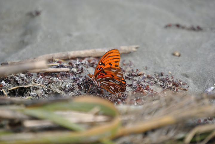 how to get rid of gulf fritillary caterpillars
