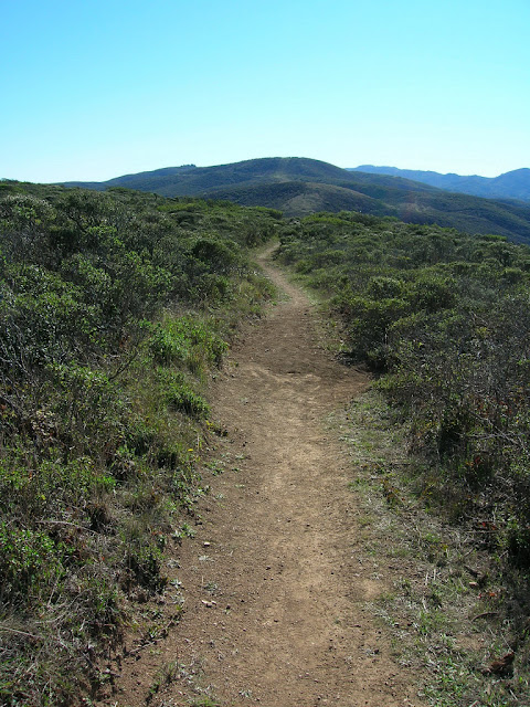 The trail running through the coastal scrub