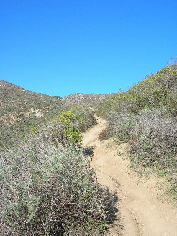 Exposed to the heat in the coastal scrub