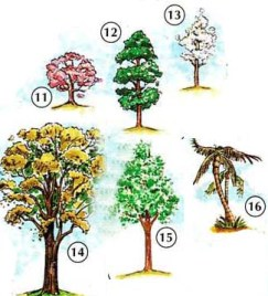 TREES% 2C% 20FLOWERS% 2C% 20AND% 20PLANTS 3 Trees, Flowers, Plants in English