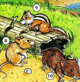 8. mouse-mice  9. chipmunk  10. rat  11. squirrel  12. rabbit