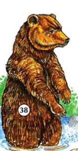 38. ours grizzli