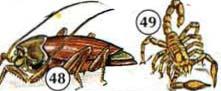 48. roach/cockroach 49. scorpion