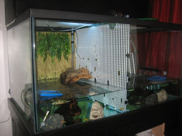 pet turtle tank picture