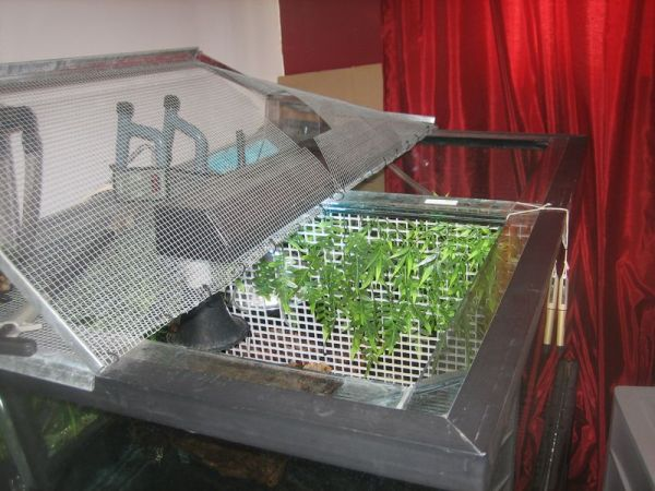 turtle tank screen top
