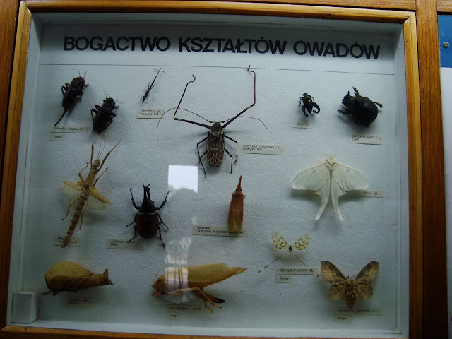 Owad owadowi nierówny...