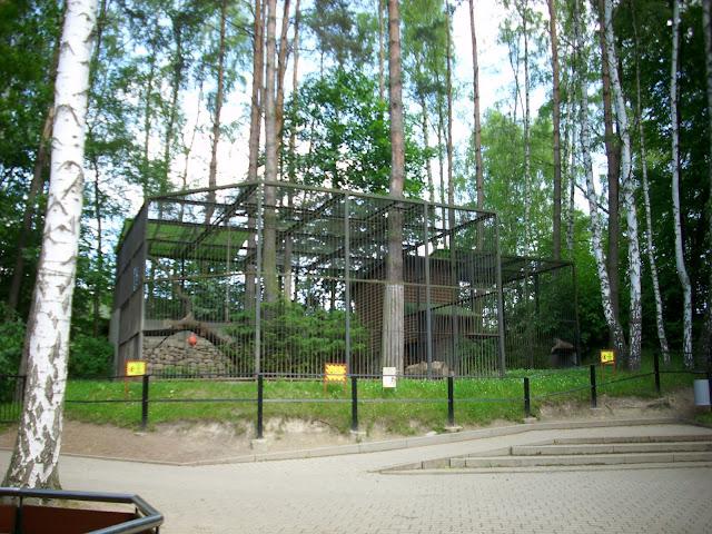 Wybieg pum - Zoo Oliwa
