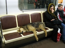Perro en Metro Moscu4