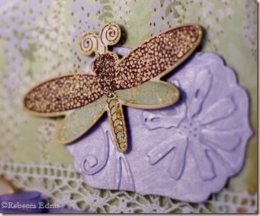 wisteria dragonfly closeup