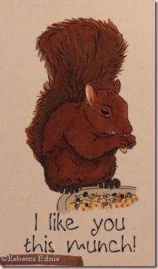 squirrel munch closeup
