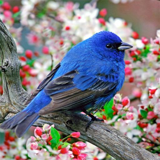 【免費娛樂APP】鳥類圖片|線上玩APP不花錢-硬是要APP