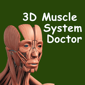 3D Muscle System