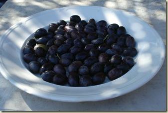olives harvested_1_1