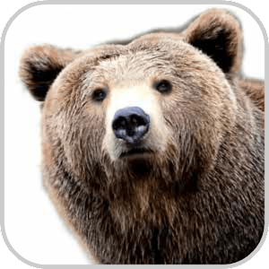 How To Draw Bear Animal