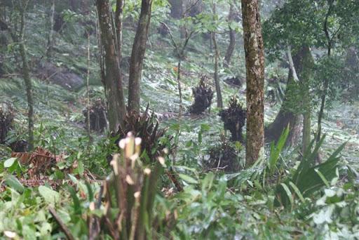 Tala de bosques en Clayton