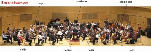 harp, conductor, double bass, violin, podium , viola, cello