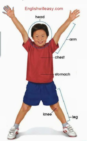 BOY CHILDREN BODY