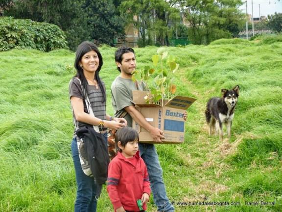 Plantación de arboles