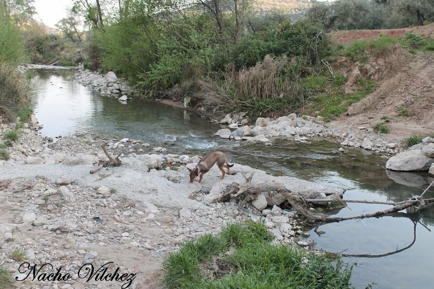 Embalse y río Colomera 06.04.14 (6/6)