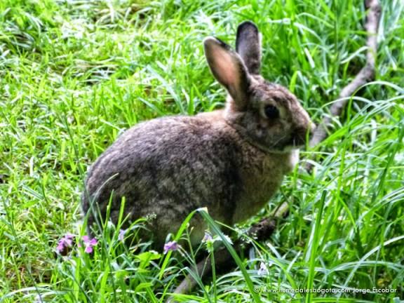 Conejo en la conejera