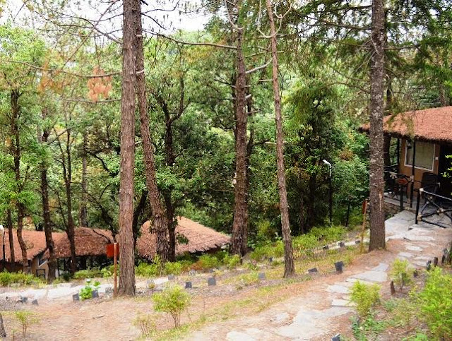 Aamod Forest Huts